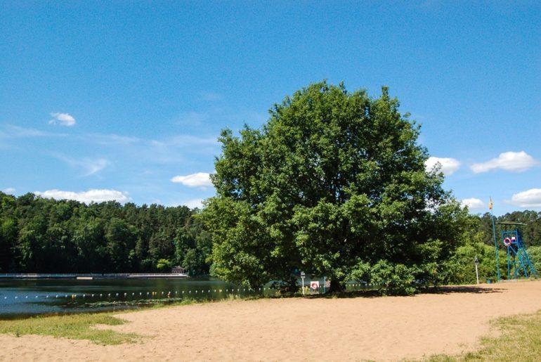 Серебряный бор: пляж и парк в Москве