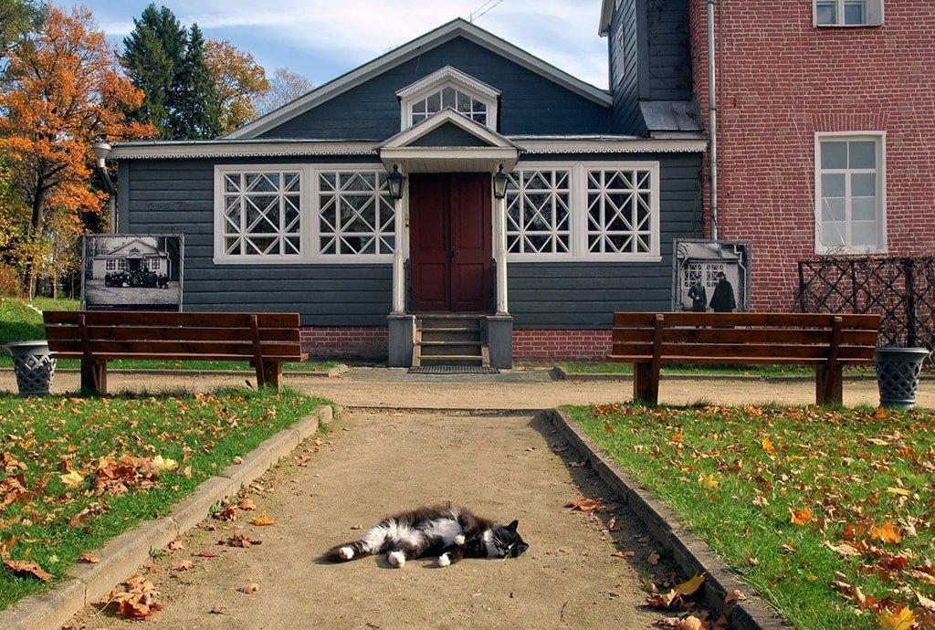 Главный усадебный дом с котом и кошка