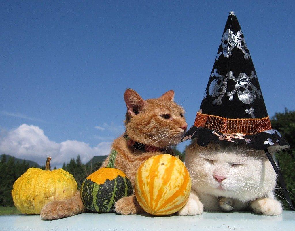 Коты-фокусники