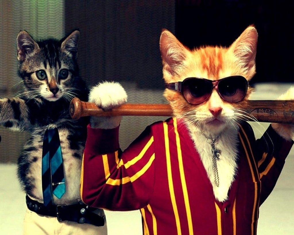 Суровые коты