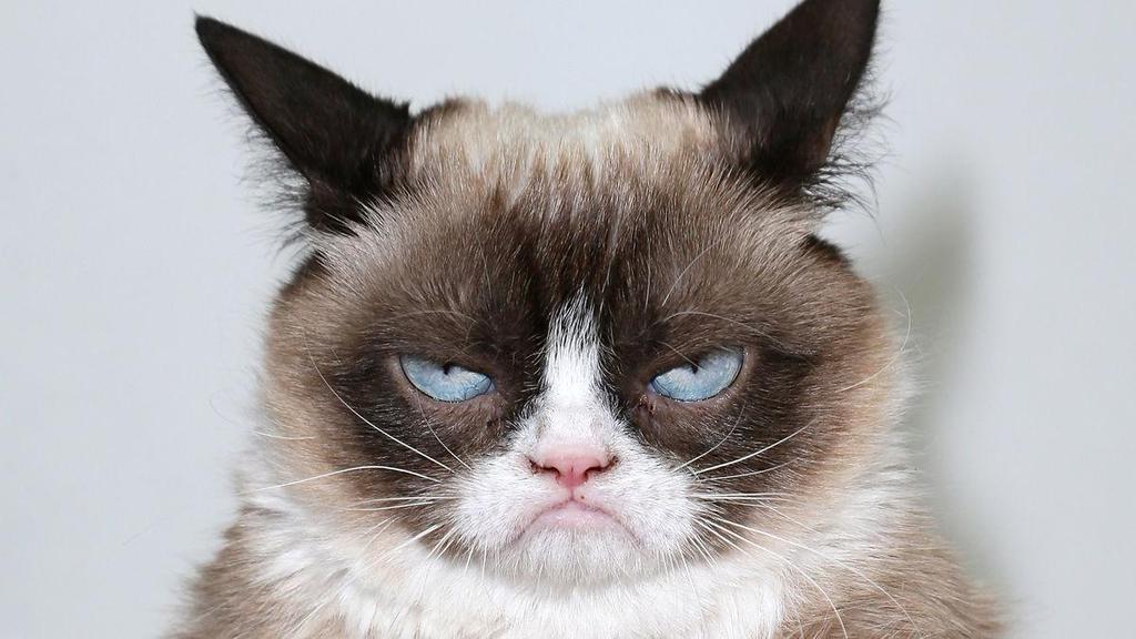 Кот недоволен