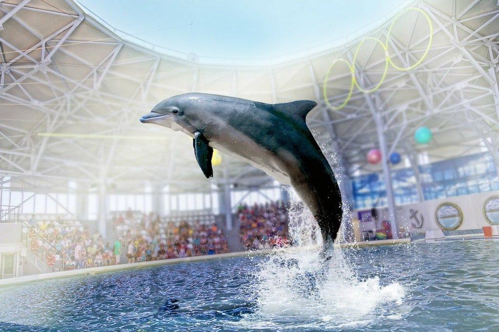 Евпаторийский Дельфинарий