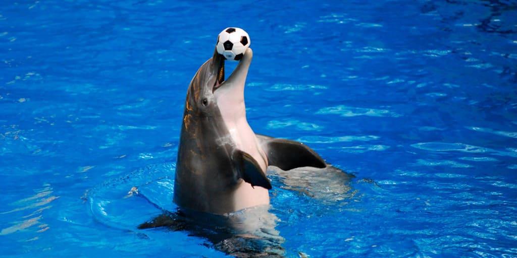 Дельфинарий на Семеновской