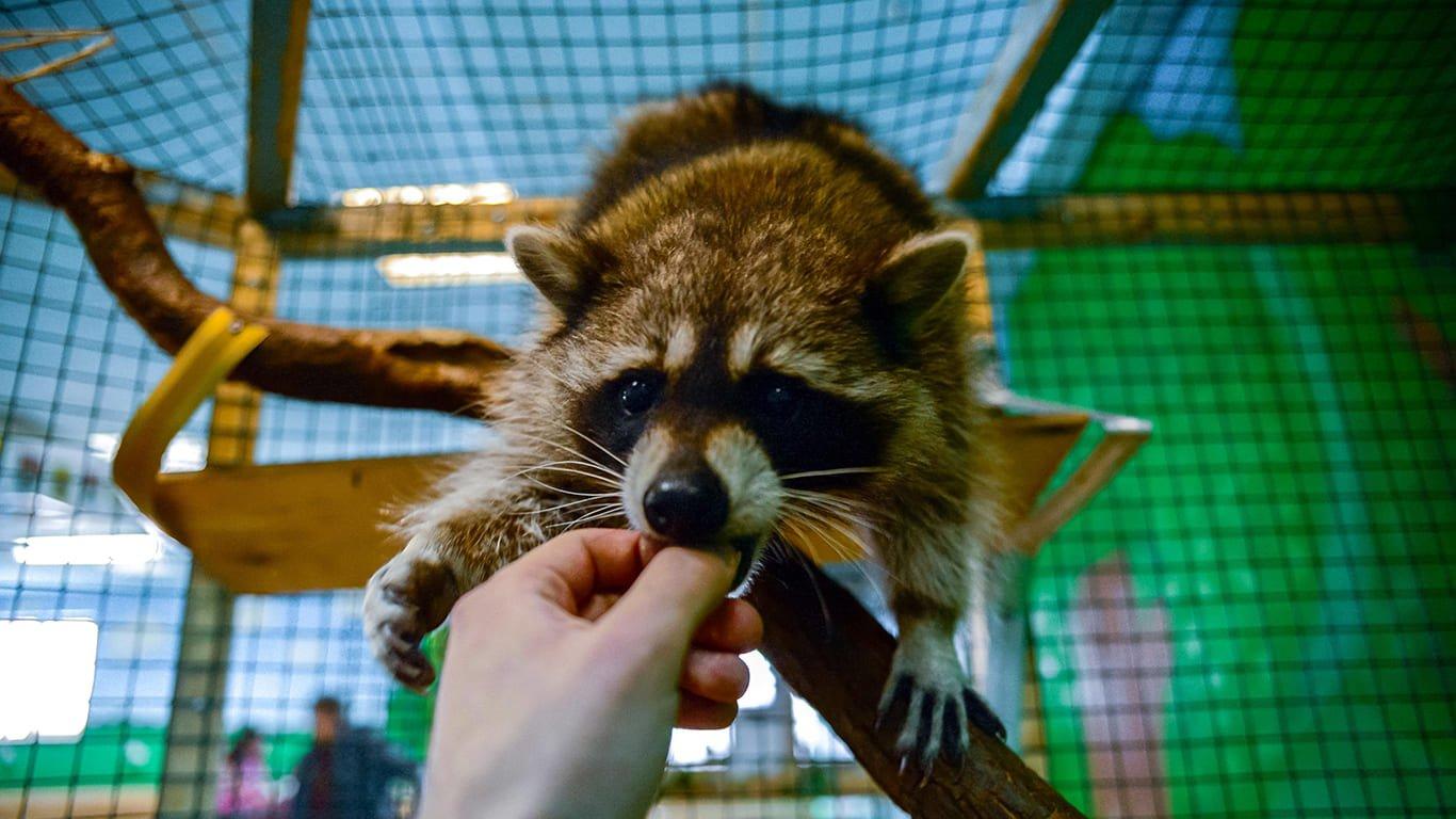 Контактные зоопарки в Москве – адреса и цены