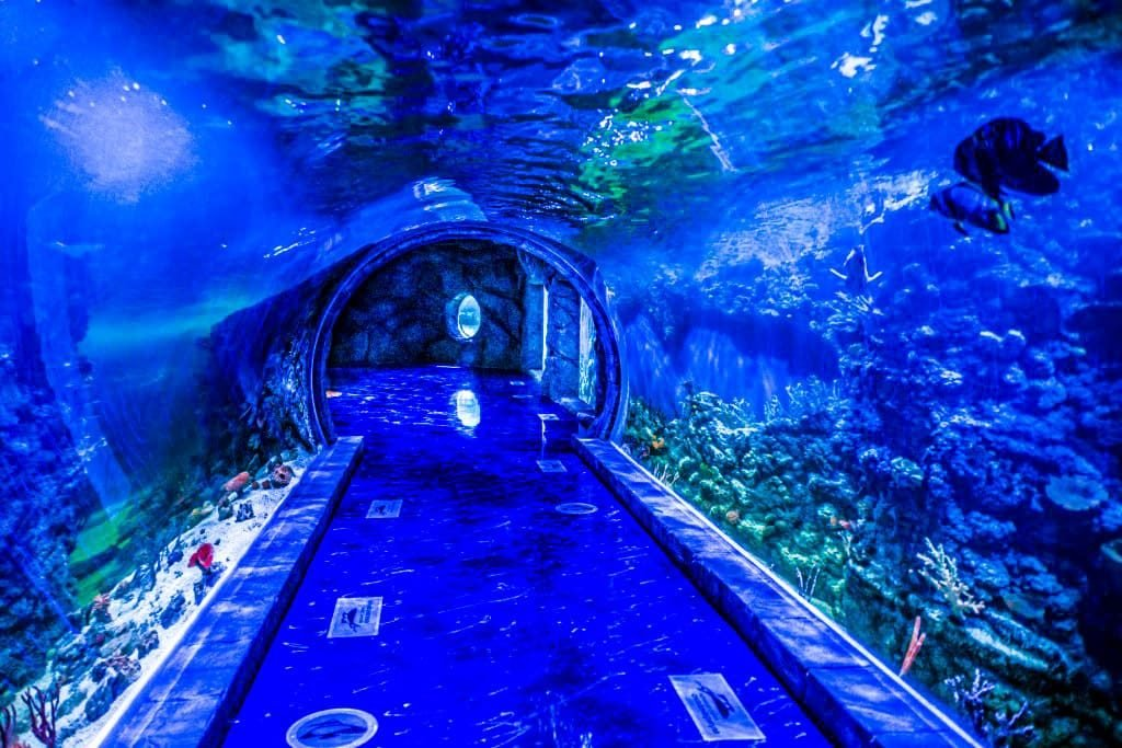 Все океанариумы в Москве – адреса, цены на билеты в 2018
