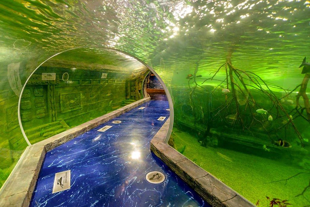 Океанариум Крокус Сити