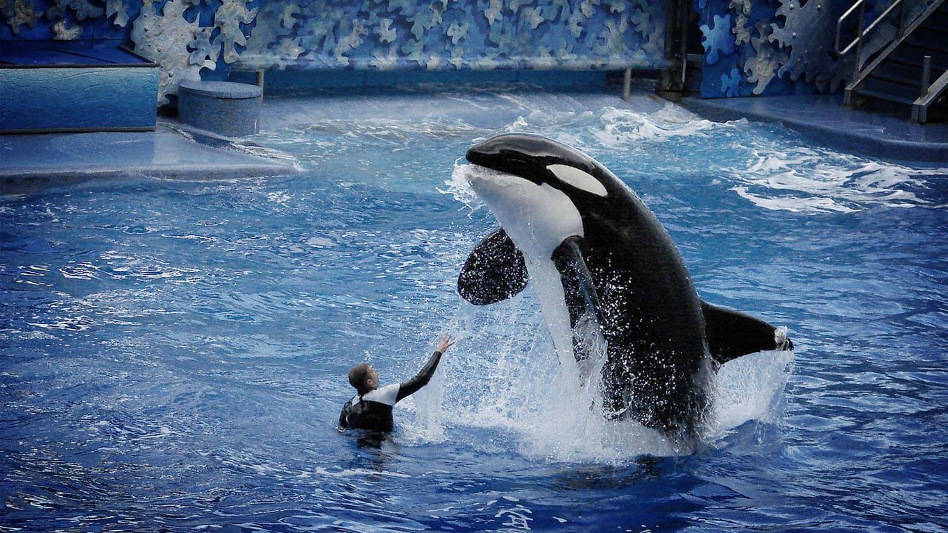 Все дельфинарии в Москве – адреса и цены
