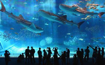 Все океанариумы в Москве – адреса, цены