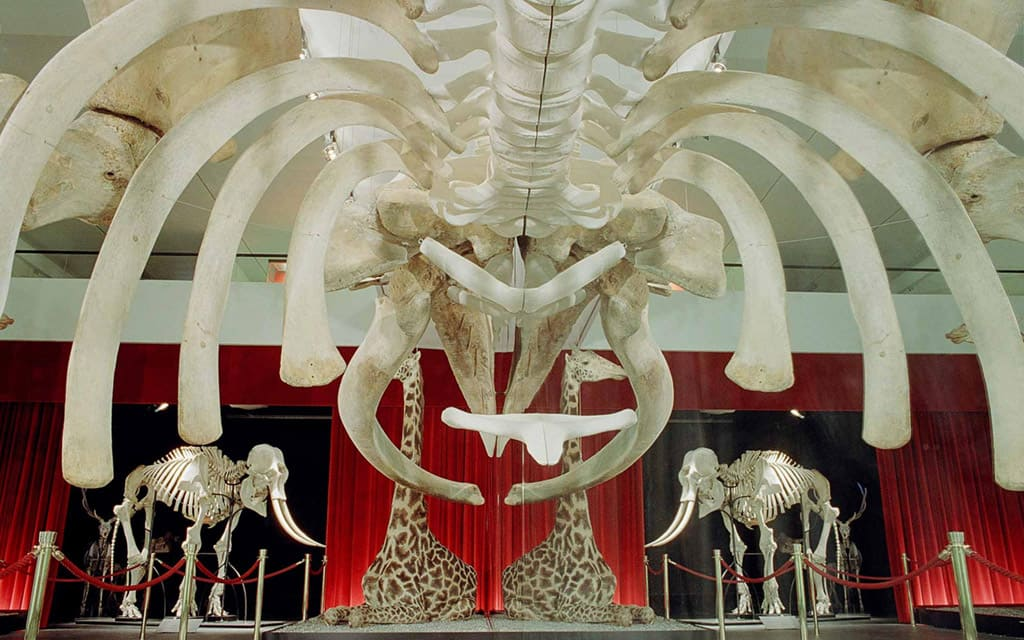 Музей естественной истории в Берне