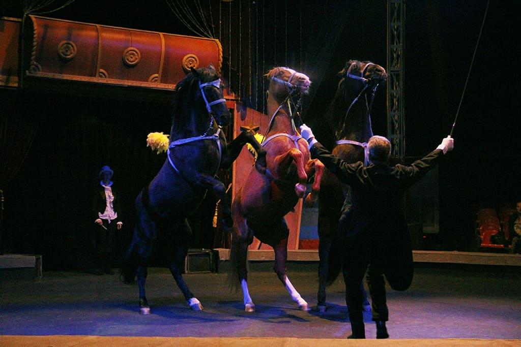 Цирк Алле - Москва