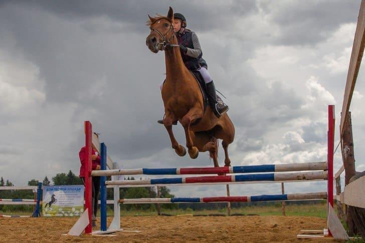 Частная конюшня Дом пестрой лошади