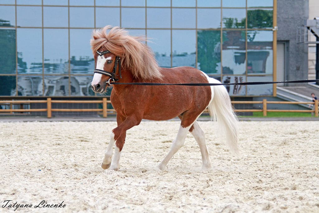 Городской конный центр (ВДНХ)