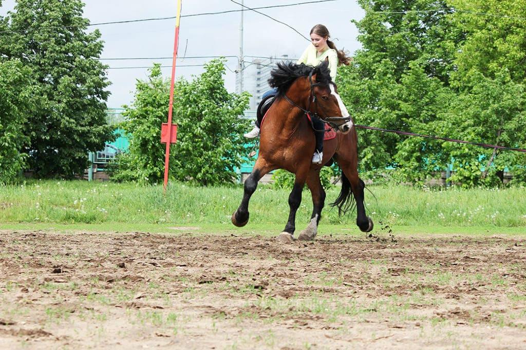 Конный клуб Лошади в Кремле